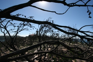 Desolation of Barrenjoey Headland after bushfire