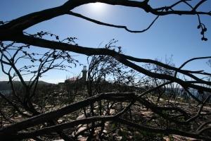 Desolation of Barrenjoey Headland after bushfire